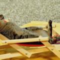 l gatto e lo stress: come accorgersi se il proprio gatto è sereno?