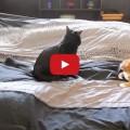Chi ha dei gatti in casa impiega 45 minuti per rifare il letto.