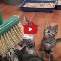 Passare la scopa con un esercito di gattini in casa ?