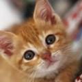 Il colore del pelo può determinare il temperamento di un gatto