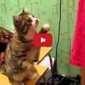 Gatto parla a gesti