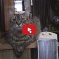 Conversare con un gatto non è mai tempo perso.