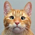 Jarvis è un gatto dai mille sguardi, a volte persino quasi umani!
