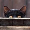 10 Cose di cui un gatto non può fare a meno.